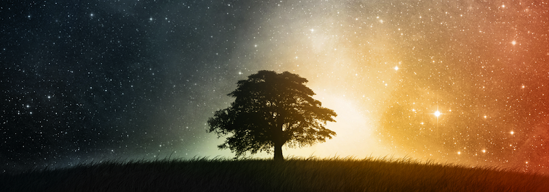 tree-meditation-insight-tharyn-banner