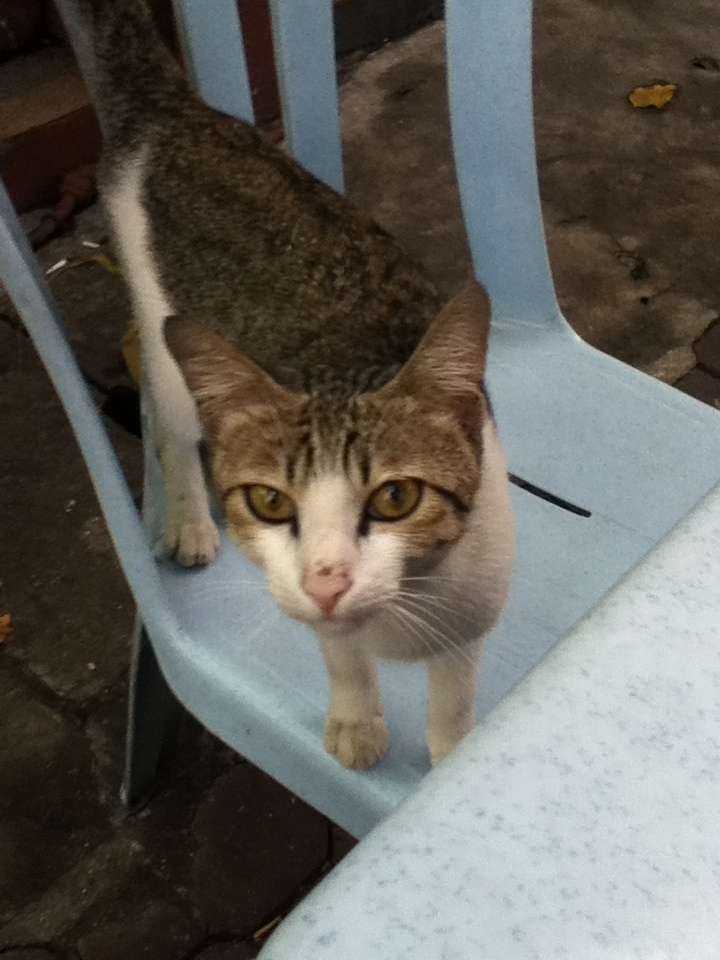 You might have teh tarik with this cat.