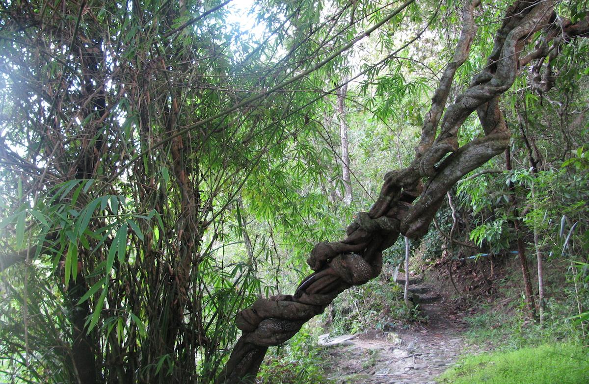 forest-branch